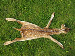 Little Fawn for soft mount