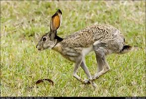 Jack Rabbit by insanitylabs