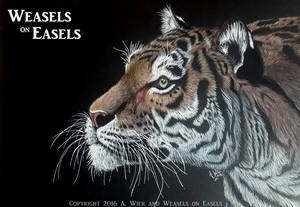 Enlightened ~ Colored Pencil Tiger