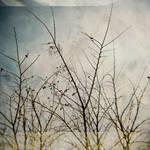 holga 7 by JasonKaiser