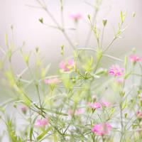 spring buds 3 by JasonKaiser
