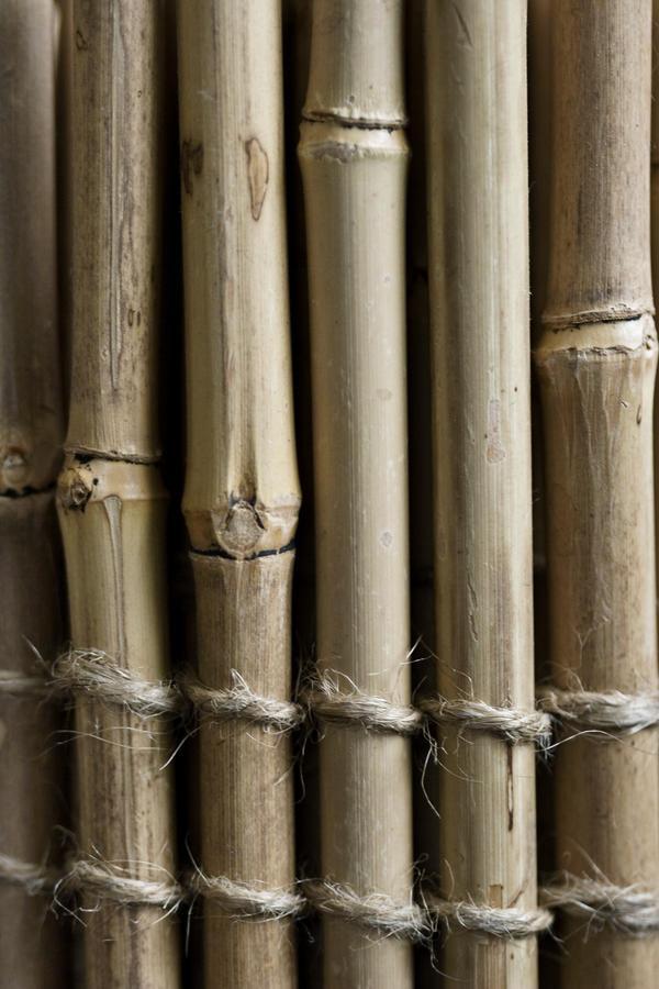 bamboo by JasonKaiser