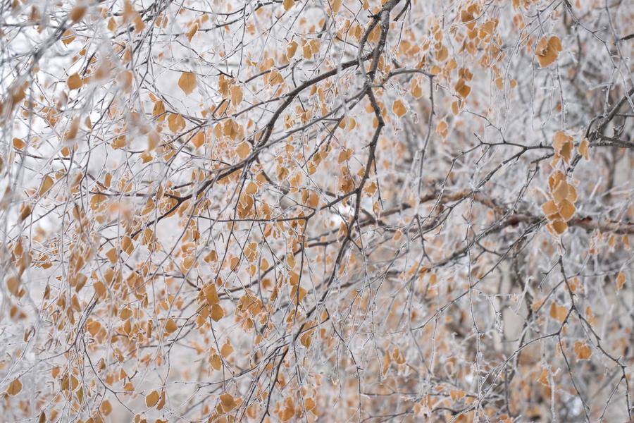 frost 98 by JasonKaiser