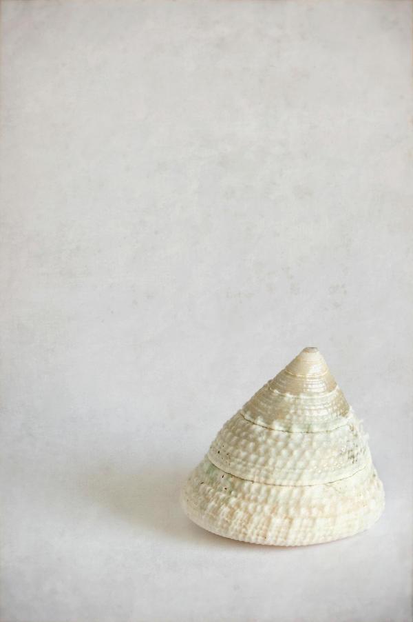 shell by JasonKaiser