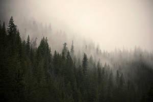misty mountain weather 17 by JasonKaiser