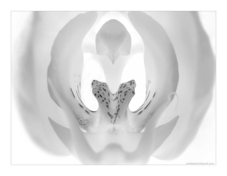 bird of prey 2