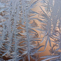frost 124