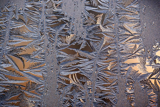 frost 126