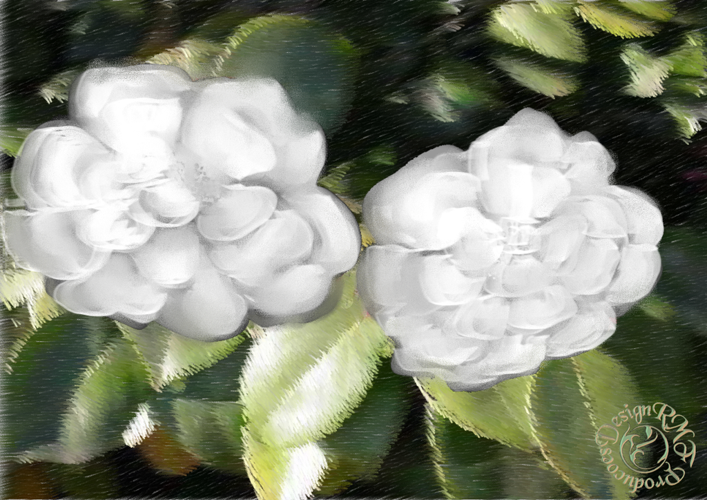 White Camellias by sting45