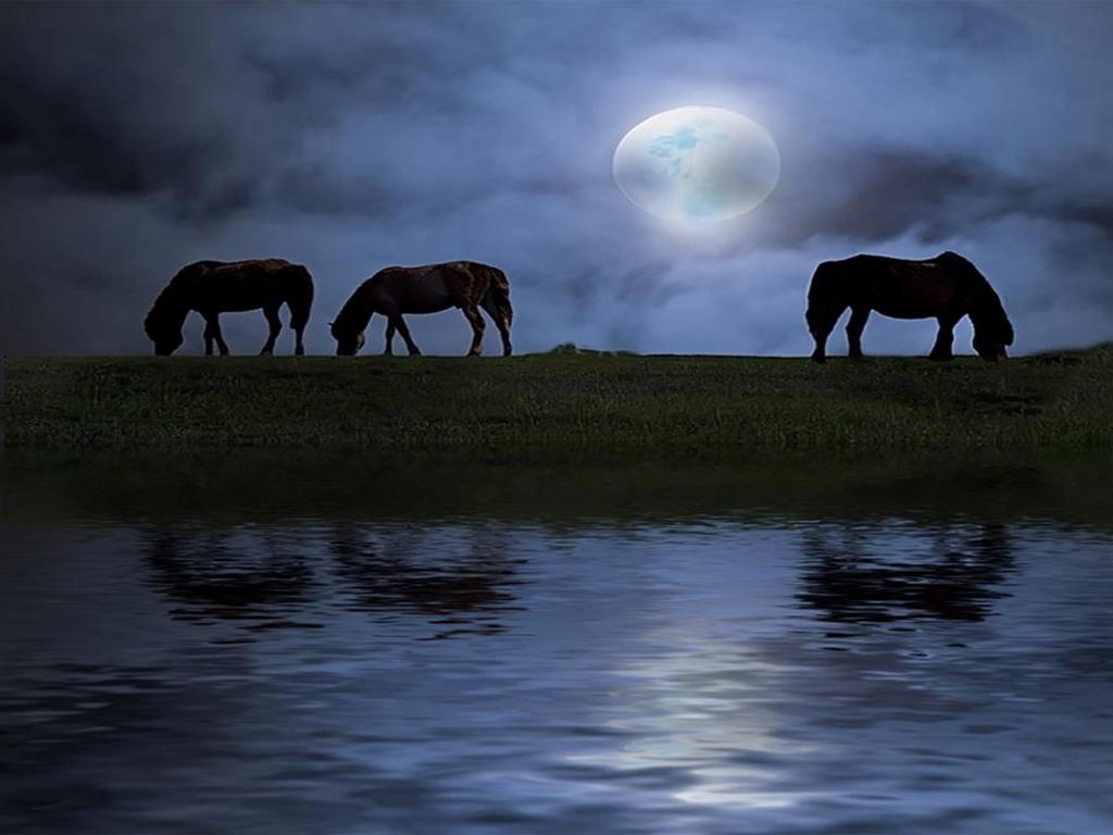 Black horses running at night - photo#9