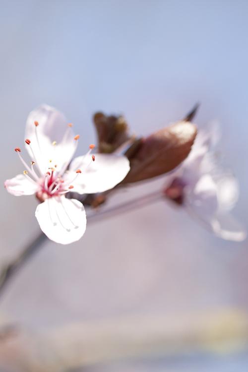 first blossom crop by 30-noir