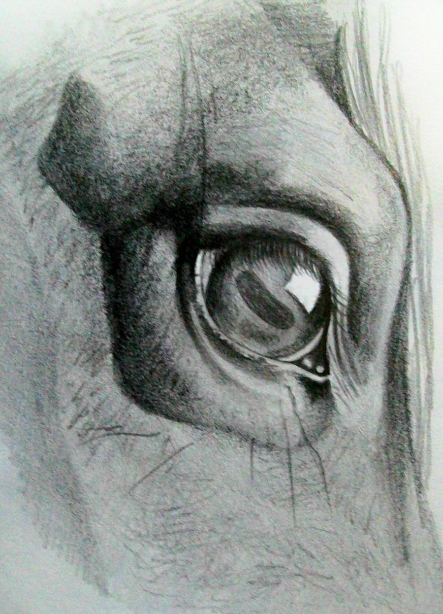 ojo de caballo by kirykat on DeviantArt