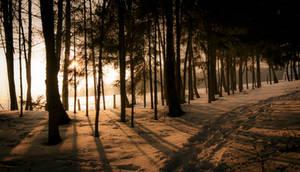 Winterforest1331