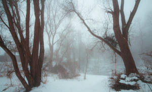 Winterforest5 by moonchild-unveiled
