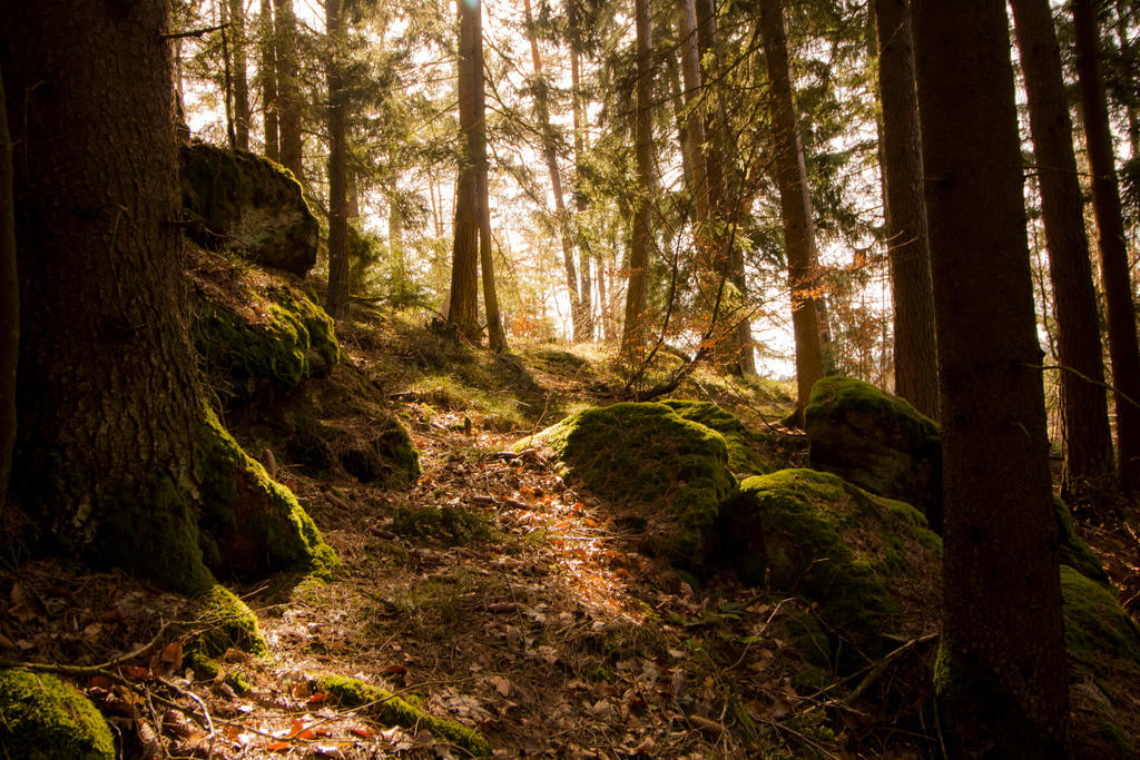 Woodland by moonchild-unveiled
