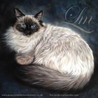 Ragdoll Cat Pastel Portrait of Mercury by LouiseMarieFineArt
