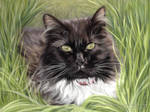 Black Cat in the Grass Pastel Portrait
