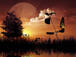Butterfly day... by Scash