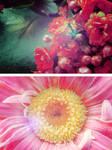 Flowers Essay