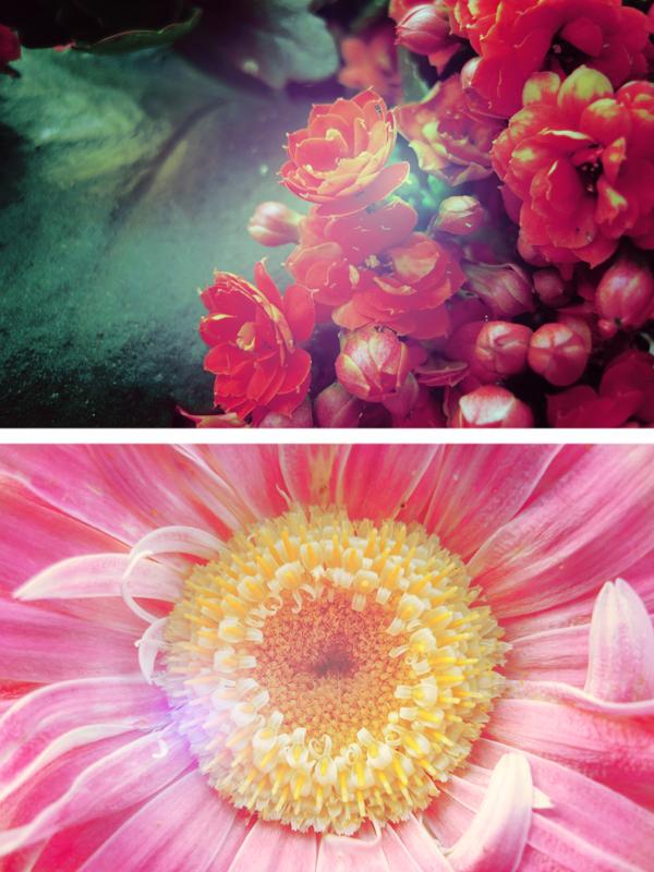 Flowers Essay by Ransie3