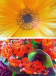 Flowers Essay II