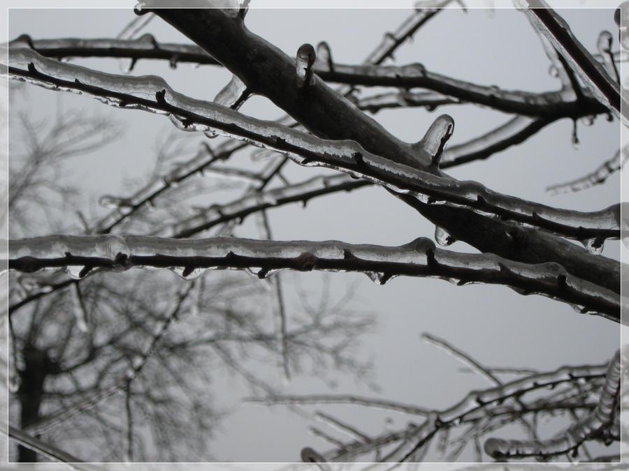 ...natura inghetata... by Camey3773