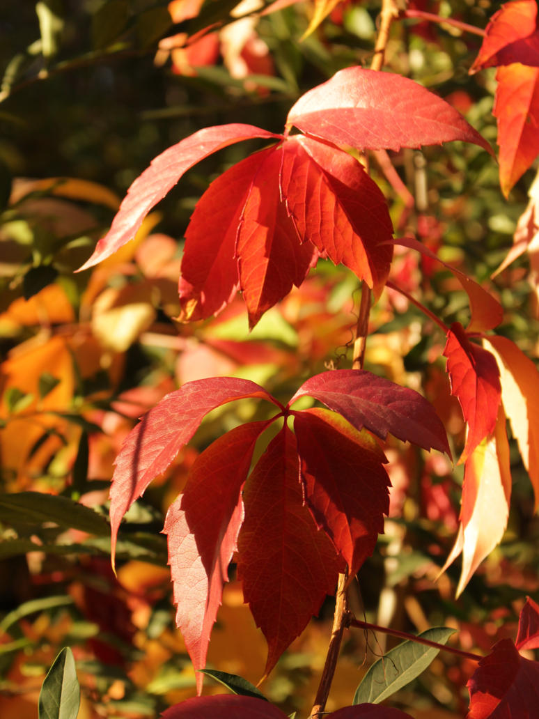 Autumn leaves by DelphineHaniel