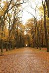 Linden alley in autumn