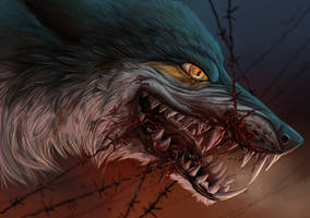 Barbed wire can't stop the wolf