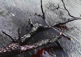 Bleeding tree by Alaiaorax