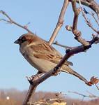 Finch Two