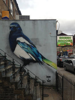 Blackstock Road Magpie