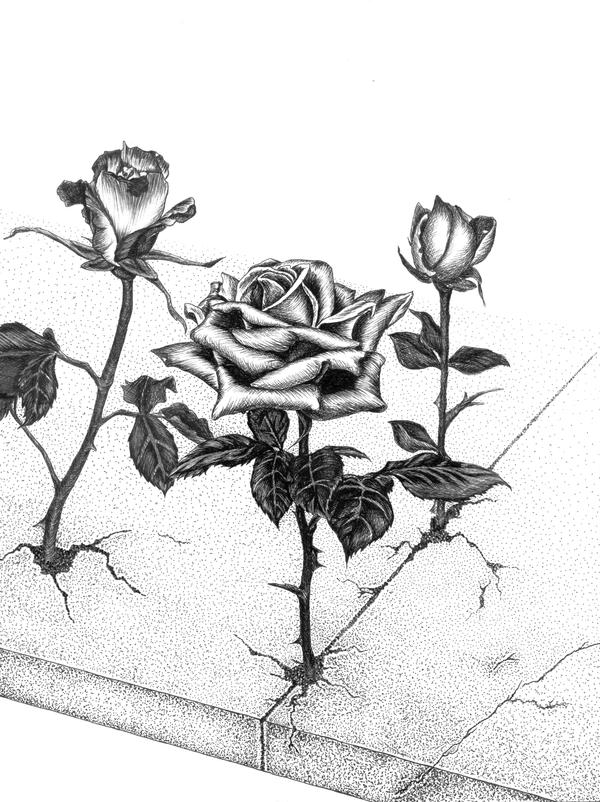 how to grow roses commercially