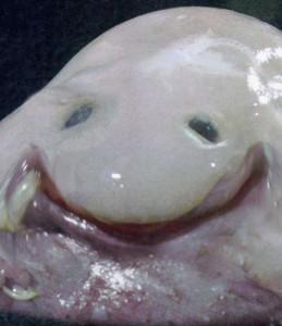 Lord-of-the-slugs's Profile Picture