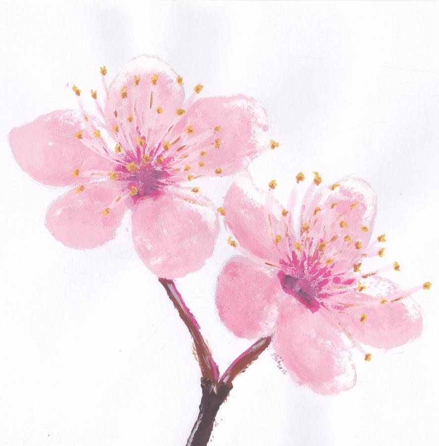 Cherry Blossom By Saili-chan On DeviantArt