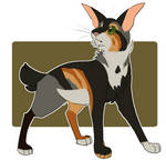 Cat adoptable (closed)