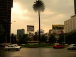 Palm Street Mexico