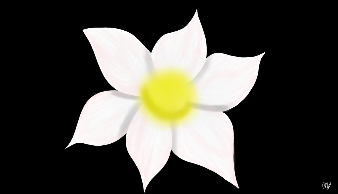White FLower by drawingwolf17