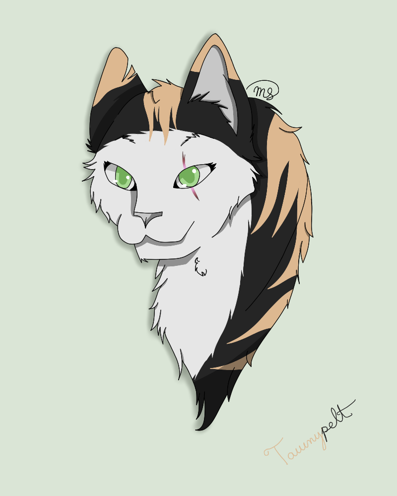 Tawnypelt of DarkClan by drawingwolf17