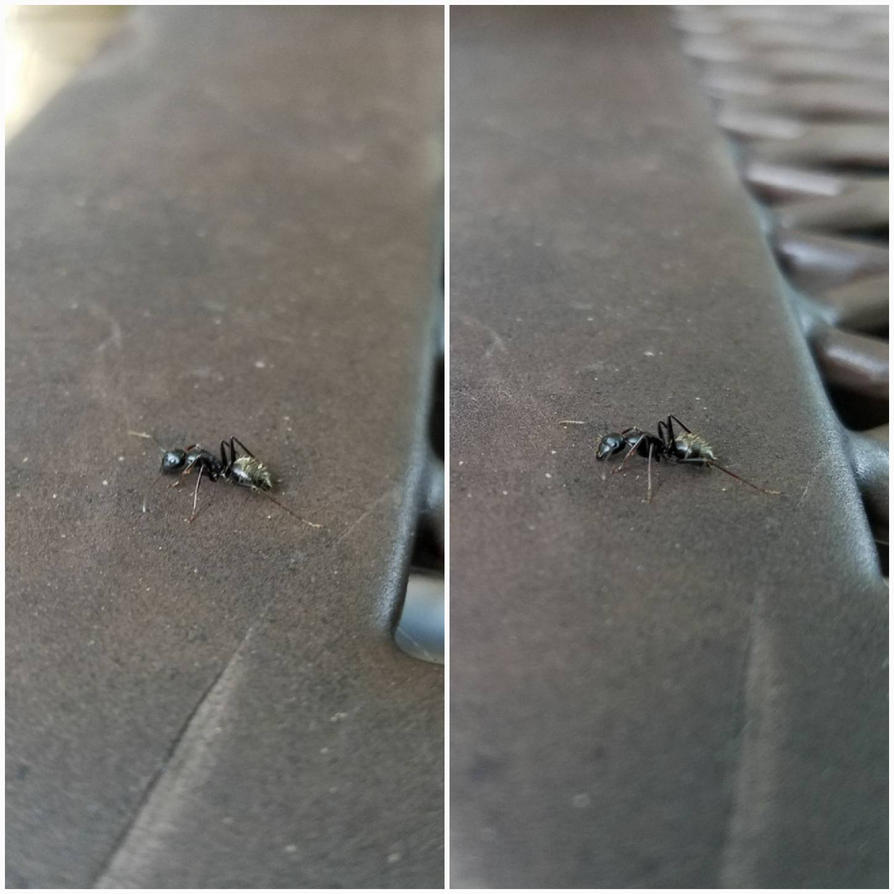 An Ant... by Julian-24