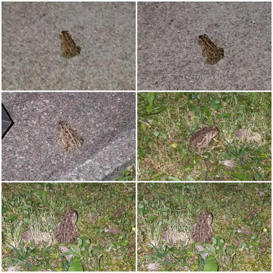 A frog. by Julian-24