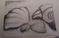 Seashells. by Ealaincraft