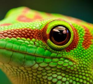 lagartijaverde's Profile Picture