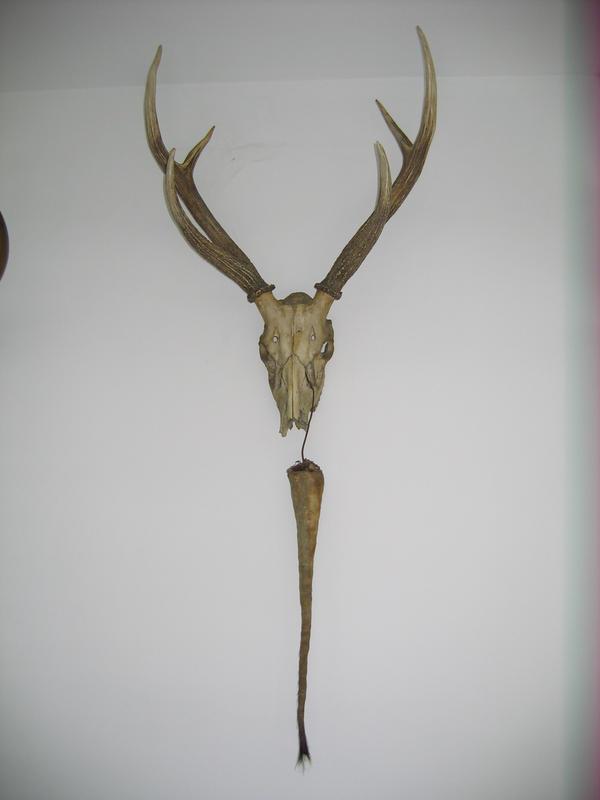 Horns Stock 2 by soulside-wanderer