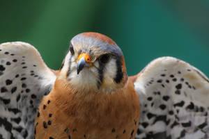 Birds of The Cascades I by Latrodectus-Pallidus