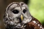 Birds of The Cascades II by Latrodectus-Pallidus
