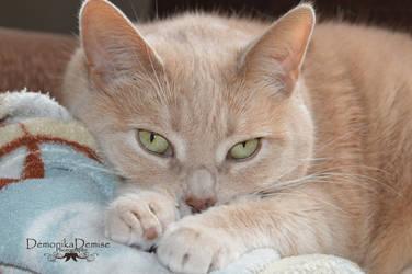 Fat Cat by DemonikaDemise