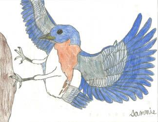 Blue Bird by maxridefan1234