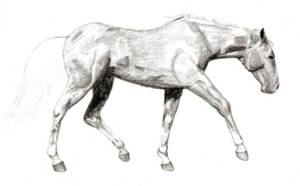 Quarter Horse Sketch by shannor