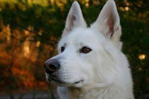 Tidesend's Pup2